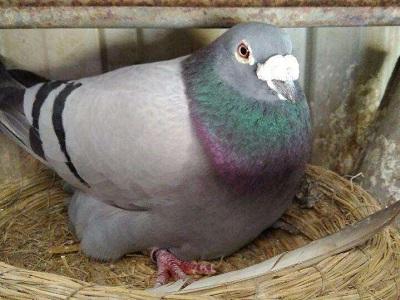 鸽膝关节炎的防治方法