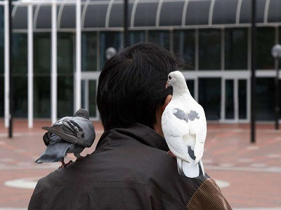 养鸽子的男人都是好男人